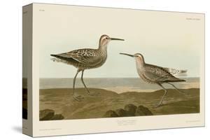 Long-Legged Sandpiper by John James Audubon