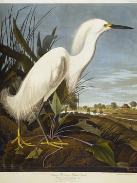 Snowy Heron or White Egret / Snowy Egret by John James Audubon