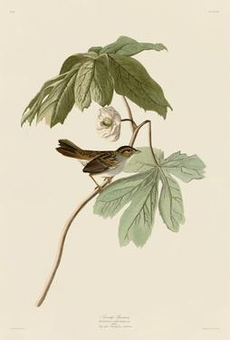 Swamp Sparrow by John James Audubon