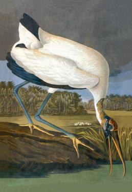 Wood Stork by John James Audubon
