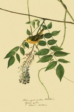 Yellow Warbler by John James Audubon