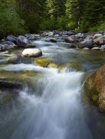 Usa, Colorado, River Flowing through Forest