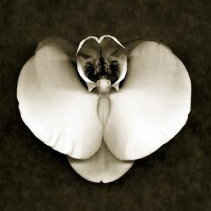 Orchid by John Kuss