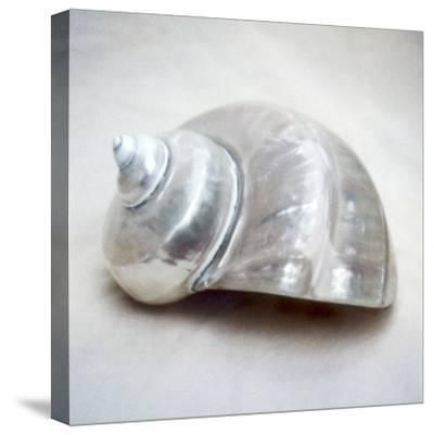 Pearl Turban Shell