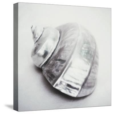 Pearl Turban Shell by John Kuss