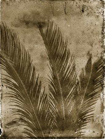 Sago Palm by John Kuss
