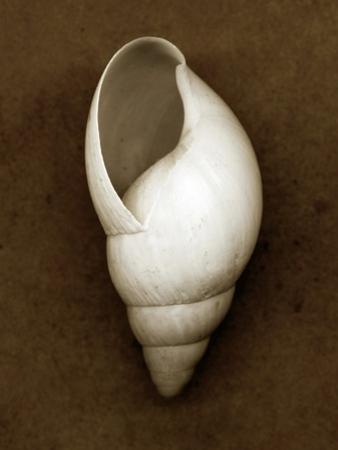White Cornball Shell by John Kuss