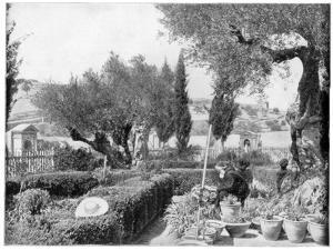 The Garden of Gethsemane, Palestine, Late 19th Century by John L Stoddard