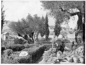 The Garden of Gethsemane, Palestine, Late 19th Century by John L Stoddard