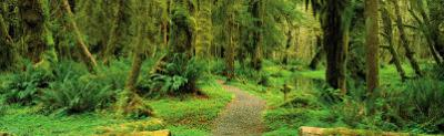 Road through Temperate Rain Forest, Olympic Peninsula