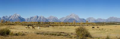 Horses and Grand Teton Mountain Range in fall, Grand Teton National Park, Wyoming by John & Lisa Merrill