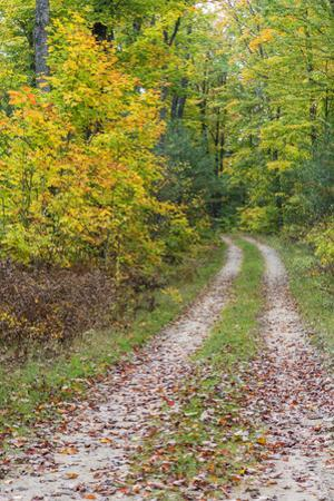 Michigan, Hiawatha National Forest, road with trees in fall color by John & Lisa Merrill