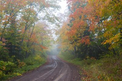 Minnesota, Pat Bayle State Forest. Fall color along road through forest by John & Lisa Merrill