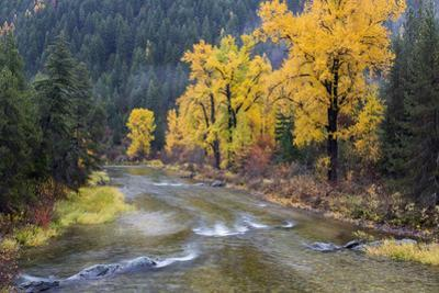 Montana, Mineral County, St. Regis River and trees with golden fall color by John & Lisa Merrill
