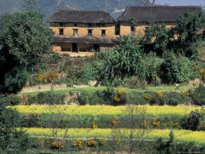 Traditional House With Thatched Roof Above Terraced Fields, Nepal by John & Lisa Merrill