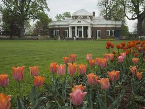 Tulips in Garden of Monticello, Virginia, USA by John & Lisa Merrill