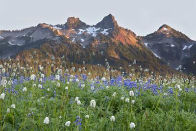 Washington State, Mount Rainier National Park, Tatoosh Range and Wildflowers by John & Lisa Merrill