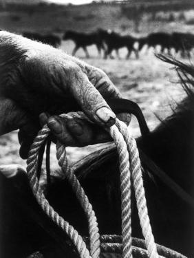 The Rough, Weathered Hand of an Oldtime Cowboy, Holding Rope by John Loengard