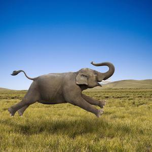 An Elephant Galloping in Freedom and Joy by John Lund