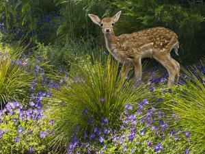 Fawn in the Garden by John Lund