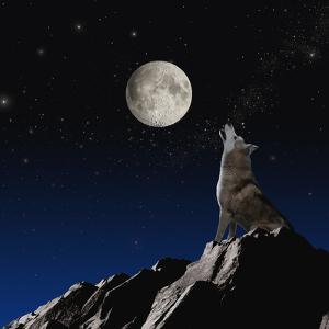 Wolf Howling at Moon by John Lund