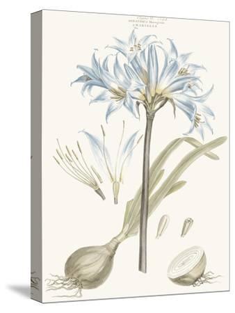 Bashful Blue Florals II