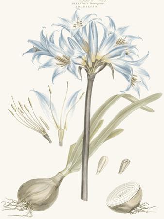 Bashful Blue Florals II by John Miller