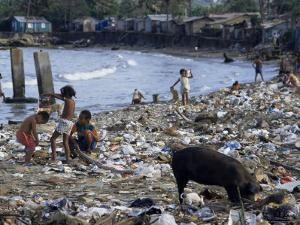 Children and Pigs Foraging on Rubbish Strewn Beach, Dominican Republic, Central America by John Miller
