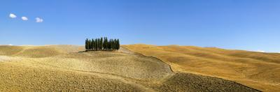 Panorama of group of Cypress trees in the landscape, Val d'Orcia, UNESCO World Heritage Site, Tusca by John Miller