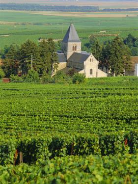 Vineyard, Oger, Champagne, France, Europe by John Miller