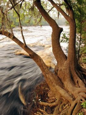 Florida, White Springs, Way Down on the Suwannee River Is Big Shoals State Park by John Moran