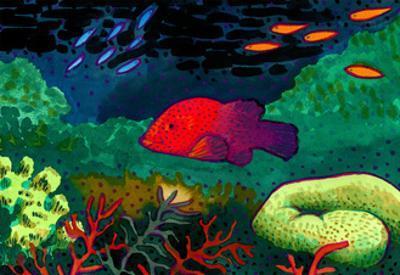 Great Barrier Reef, Australia by John Newcomb