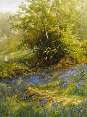 Nature's Carpet by John Noel