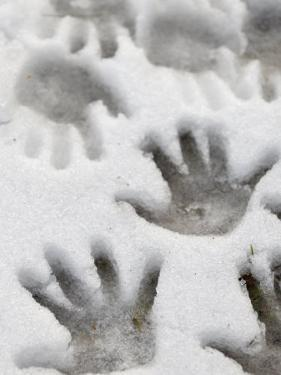 Children's Handprints in a Spring Snow by John Nordell