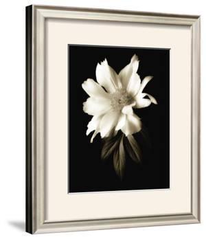 Portrait in White I by John Rehner