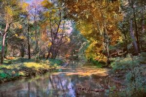 Autumn in the Afternoon by John Rivera