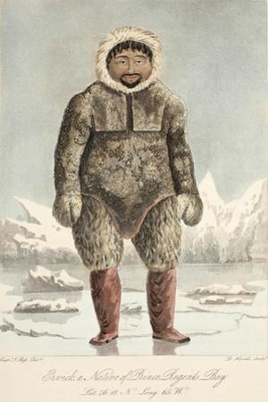 Arctic Highlander