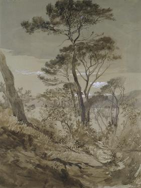Stone Pines at Sestri by John Ruskin