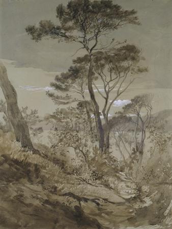 Stone Pines at Sestri