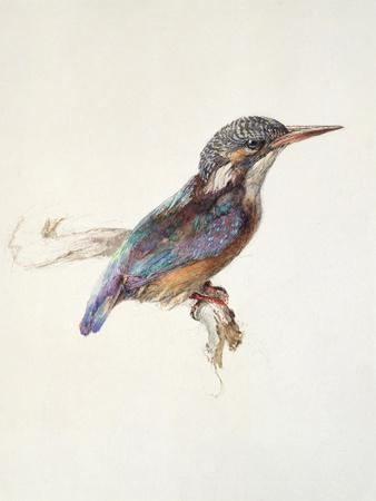 Study of a Kingfisher, with Dominant Reference to Colour, Probably October 1871