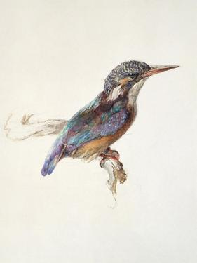 Study of a Kingfisher, with Dominant Reference to Colour, Probably October 1871 by John Ruskin
