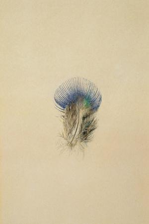 Study of a Peacock Feather, 1873