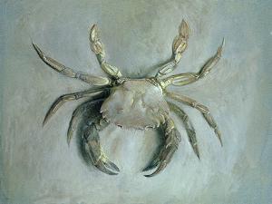 Velvet Crab, 1870-1 by John Ruskin