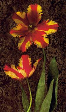 Decorative Tulips II by John Seba