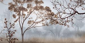Early Morning Mist II by John Seba