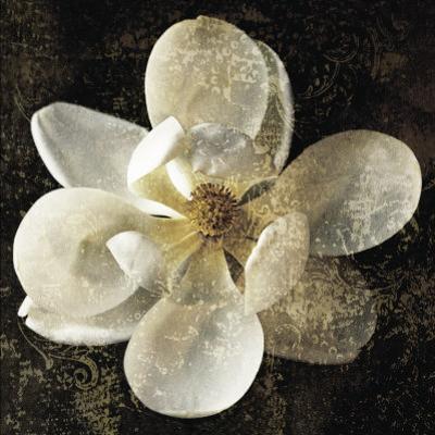 Magnolia I by John Seba