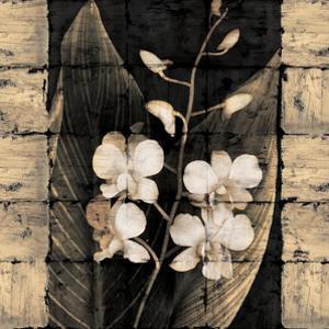 Orchids in Bloom I by John Seba