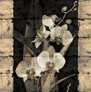 Orchids in Bloom II by John Seba