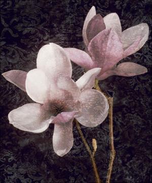 Pink Magnolias I by John Seba