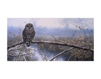 Autumn Mist - Barred Owl